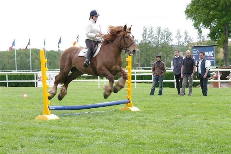 cheval de trait obstacle