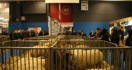 photo diaporama sorties veaux vaches cochons...: les sarthois au salon de l'agriculture