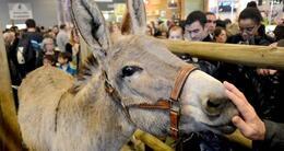 photo diaporama sorties salon de l'agriculture: en images : les animaux insolites