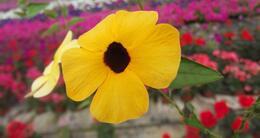 photo diaporama info une petite fleur dans le royaume coloré...
