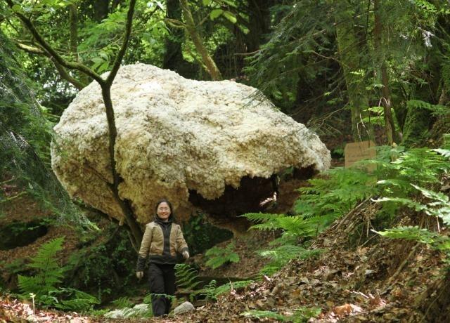 Art et nature en Centre Bretagne: Lieux mouvants ouvre ses jardins
