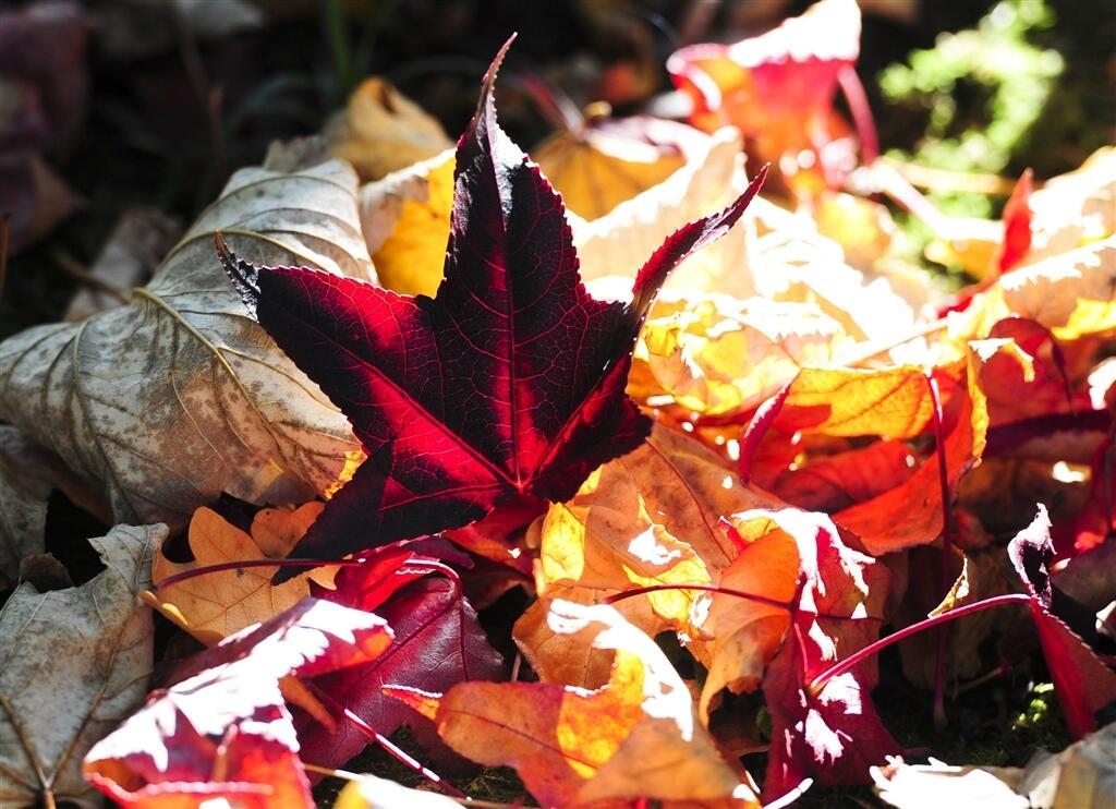 Le Mans. Le Jardin des plantes prend ses couleurs d\'automne ...