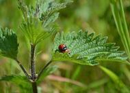 biodiversité en ville : ces habitants de mayenne qu?on ne remarque pas