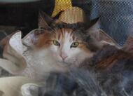 en images. le salon du chat rassemble les amoureux des félins à dinan