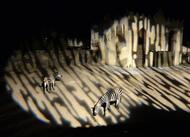 les animaux de pont-scorff en lumière