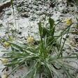photo diaporama sorties vos plus belles photos du grand ouest sous la neige ! 315313