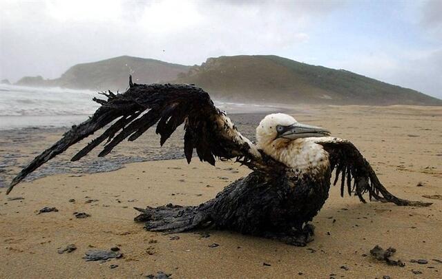 photo douze ans après le naufrage du pétrolier, près de 30millions d'euros ont été versés aux victimes de la marée noire.