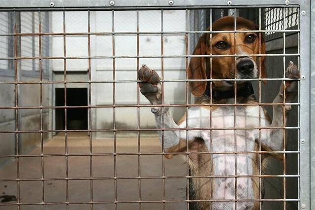 Le refuge SPA de Loire,Atlantique, à Carquefou, a atteint sa limite de  capacité d\u0027accueil autorisée, avec 204 chiens et 150 chats.