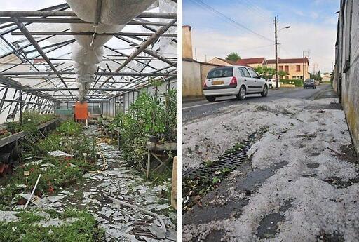 A gauche, dans la serre du site Rabelais de l'hôpital. A droite, à 8 h, dans la rue du Bédouard à Fontenay.