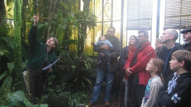Jardin des plantes : Le « Pénis de Titan » sur le point d\'éclore ...