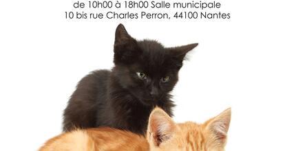 Journee Adoptions Chats Et Chatons Internaute Nantes Maville Com