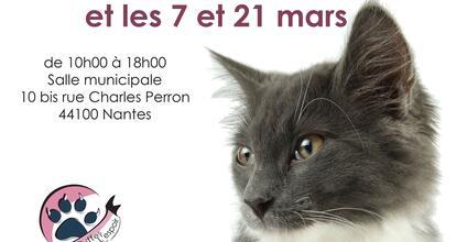 Adopter Un Chat Ou Un Chaton A Nantes Internaute Nantes Maville Com