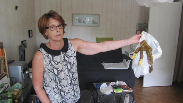 polémique : des appartements infestés par les moucherons à rennes