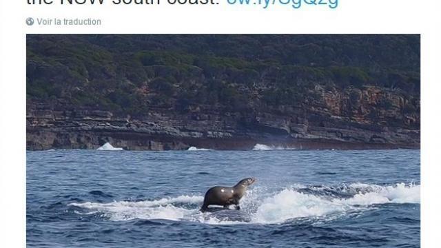Insolite : Le phoque surfe sur le dos d'une baleine à bosse !