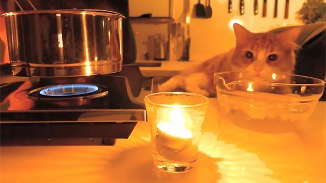 Il Cuisine Un Repas Gourmet Pour Son Chat Video Rennes