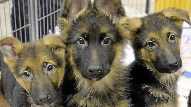 Pourquoi Adopter Un Animal A La Spa Saint Brieuc Maville Com
