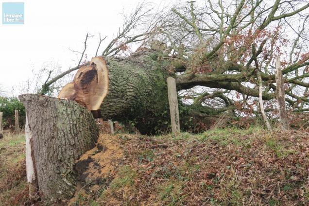 abattage arbre maison