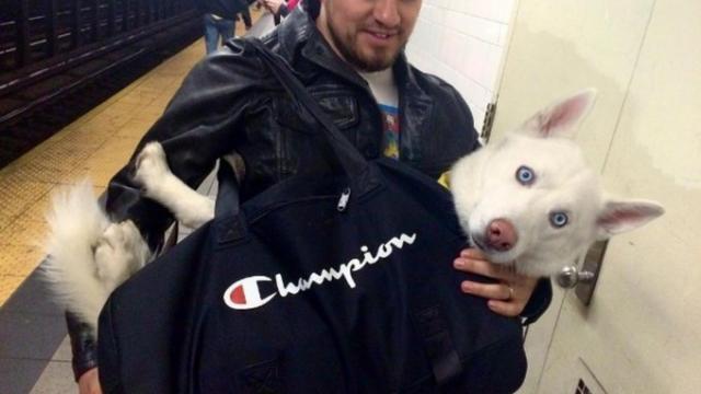 Les chiens en sac font fureur dans le métro new-yorkais. Info ...