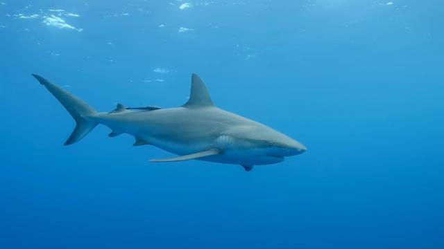 photo alors qu'elle enquêtait sur une affaire de recel d'animaux sauvages, la police a découvert une piscine remplie de requins, au sous-sol d'une maison, à new-york, aux états-unis. © photo d'illustration fotolia