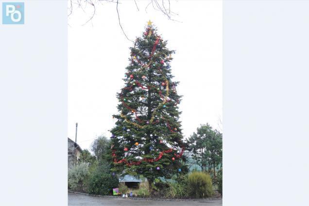Nantes. Insolite : le plus grand sapin de Noël est au Grand
