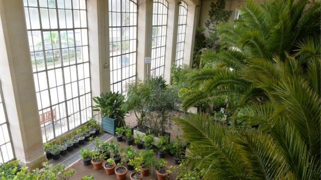 Caen. Découvrez les mystères de l\'orangerie du jardin des plantes ...