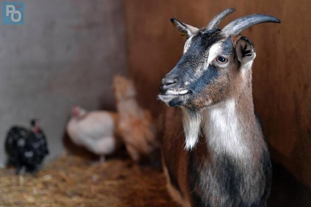 Nantes. Jardin des plantes : ne pas donner de pain aux chèvres ...