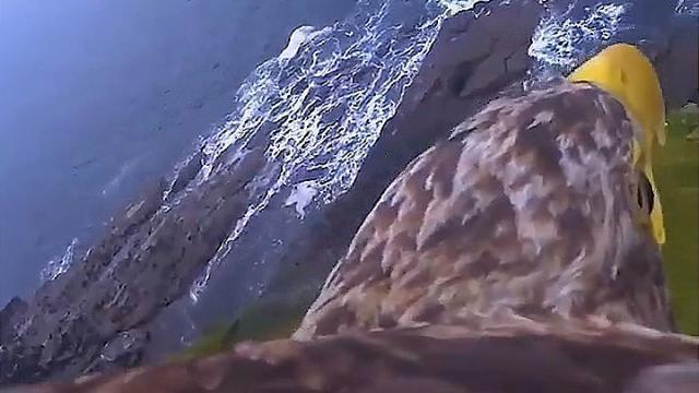 Qu'il Voit Le Sur Pour D'un Embarquez Video Ce Aigle Voir Dos SAzwqxv