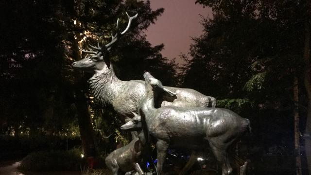 Nantes. Majestueux cerf dans la nuit du jardin des plantes - Nantes ...