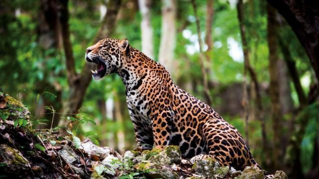 photo la zone caraïbe/amérique du sud affiche un bilan effrayant : -89% d'animaux sauvages en 44 ans. © ho / wwf / afp