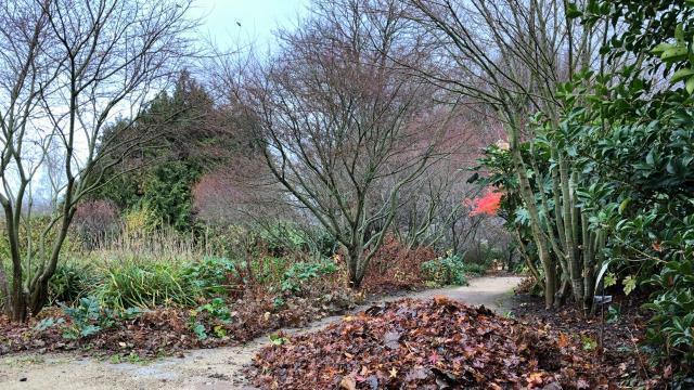 Avranches Travaux D Hiver Au Jardin Des Plantes Saint Lo Maville Com