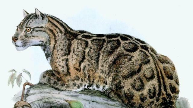 Snow Leopard datant