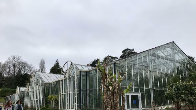 Caen. Quand rouvrira la serre tropicale du Jardin des plantes ? - Caen.maville.com