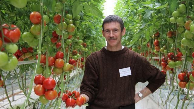 Samedi, les tomates se dévoilent dans les serres à Cesson ...