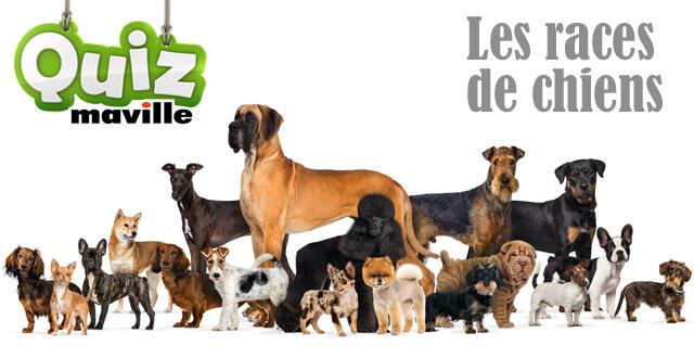 Chien Propre - 10 astuces à savoir - Education du chien - Les règles d'or