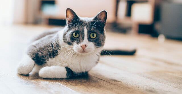 photo une vie de chat, ça n'est pas de tout repos ! © violetastoimenova sur istock