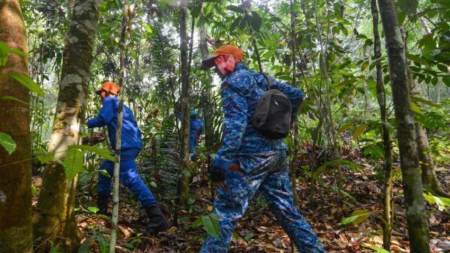 photo des membres d'une équipe de secours à la recherche de nora quoirin dans la jungle près de seremban, en malaisie, le 11 août 2019. © fuad nizam / afp