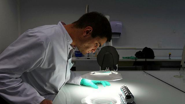 photo cela fait une décennie que des chercheurs ont appris à exploiter des cellules souches adultes de cette manière (photo d'illustration). © josselin clair / photopqr / le courrier de l'ouest