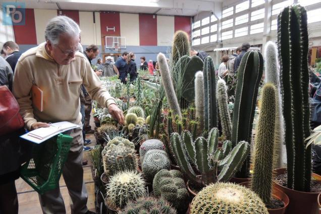 Nantes Des Cactus En Folie Au Grand Blottereau Ce Week End