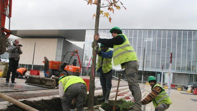 photo plantation d'arbres place des jacobins, au mans. © achives ouest-france