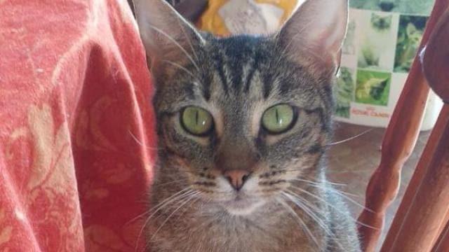 Chateau Gontier Chat O Cats Qui Veut Adopter Nenuphea Laval Maville Com