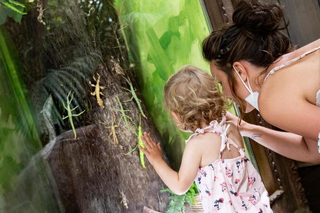 Le jardin sans eau, nouveauté 2020 de Terra Botanica - Angers.maville.com