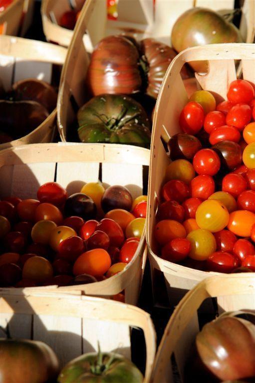 foto el tomate en todas sus formas.  en el invernadero nacional de tomates 700 variedades colorean los caminos de los jardines del château de la bourdaisière © dr conservatoire de la tomate, château de la bourdaisière